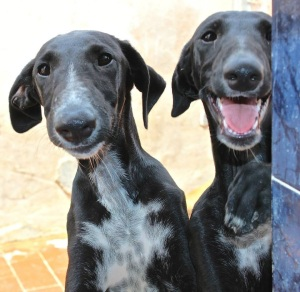 Prim and Finnick - professional poopers and love to jump it all up pur legs! Can you help with some puppy cuddles?
